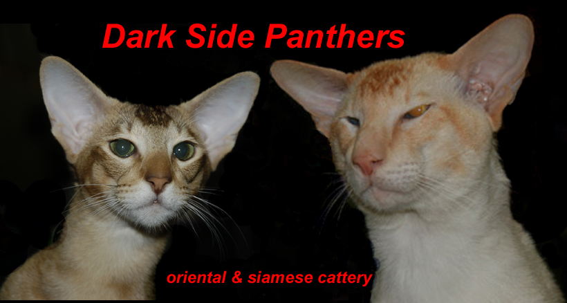 Dark Side Panthers